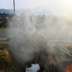Bamboo haze