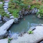 Miyajima Koi Pond